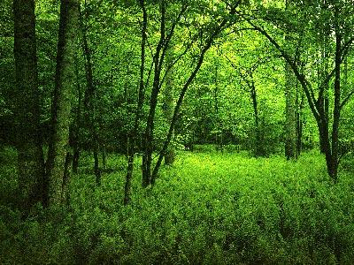 Simbolika e ngjyrave Green-Healing